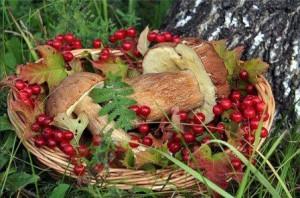 грибы, ягоды